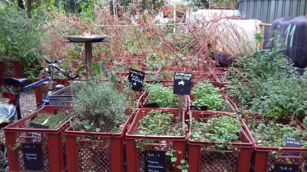 Folge 5 Prinzessinnengarten Kartoffeln Sind Aus Touristen Sind